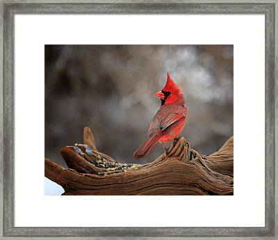 Cardinal On A Log Framed Print by Bill Wakeley