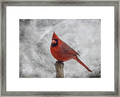 Cardinal Watching Framed Print by Sandy Keeton