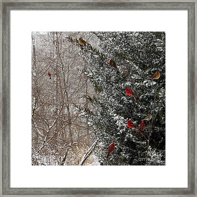 Cardinals In Winter 1 Square Framed Print