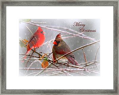 Cardinals - Male And Female - Img_003card Framed Print
