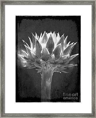 Cardoon Framed Print by Elena Nosyreva