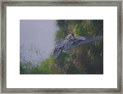 Framed Print featuring the photograph Careful Landing by Dennis Baswell