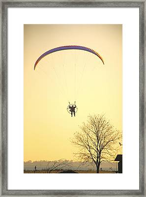 Careful Of That Tree Framed Print by Karol Livote