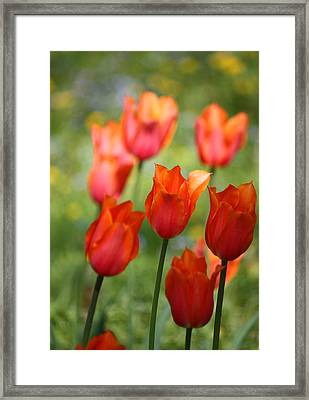 Framed Print featuring the photograph Caressed By The Wind by The Art Of Marilyn Ridoutt-Greene