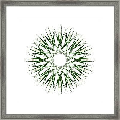 Carex Sylvatica Framed Print