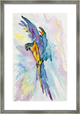Caribbean Blue Macaw Framed Print
