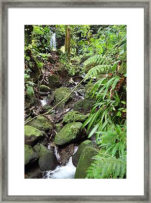 Caribbean Cruise - Dominica - 1212247 Framed Print by DC Photographer