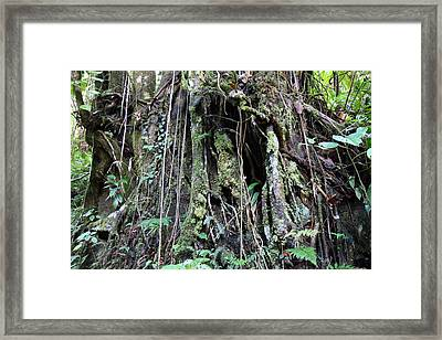 Caribbean Cruise - Dominica - 1212259 Framed Print by DC Photographer