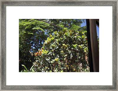 Caribbean Cruise - Dominica - 121292 Framed Print
