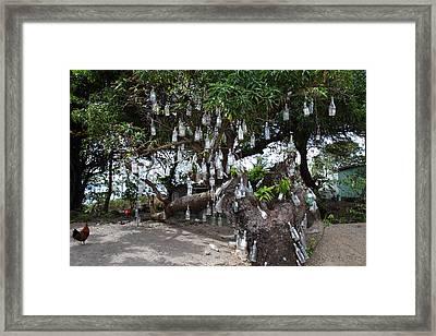 Caribbean Cruise - St Kitts - 1212164 Framed Print by DC Photographer