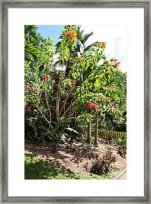 Caribbean Cruise - St Kitts - 1212187 Framed Print by DC Photographer
