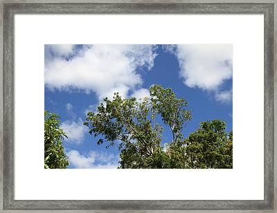 Caribbean Cruise - St Kitts - 121225 Framed Print by DC Photographer