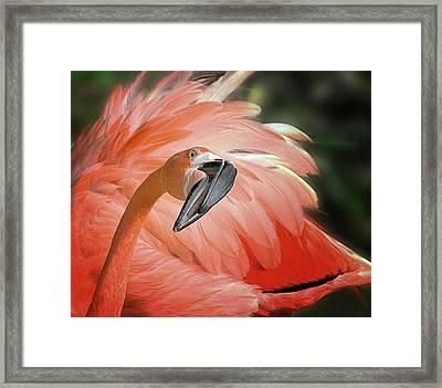 Caribbean Flamingo Framed Print