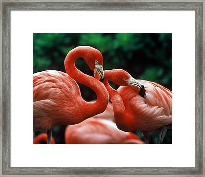 Wanna Hang Out Tonight Pinky? Framed Print
