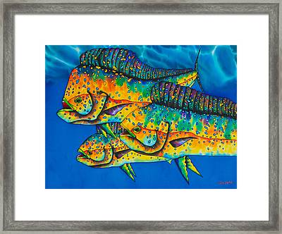 Caribbean Mahi Mahi - Dorado Fish Framed Print by Daniel Jean-Baptiste