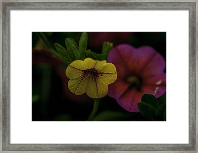 Caribbean Mix 2 Framed Print by Jean-Jacques Thebault