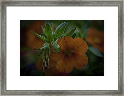 Caribbean Mix 5 Framed Print by Jean-Jacques Thebault