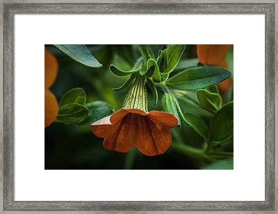 Caribbean Mix 7 Framed Print by Jean-Jacques Thebault