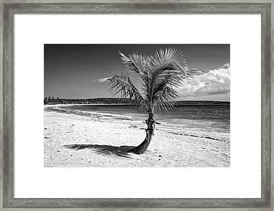 Caribbean, Puerto Rico, Vieques Framed Print by Jaynes Gallery