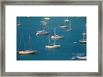 Caribbean Sailboats Framed Print by Amy Cicconi