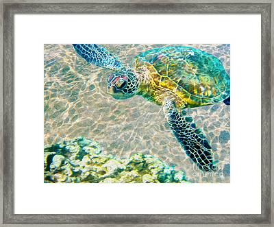 Beautiful Sea Turtle Framed Print by Jon Neidert