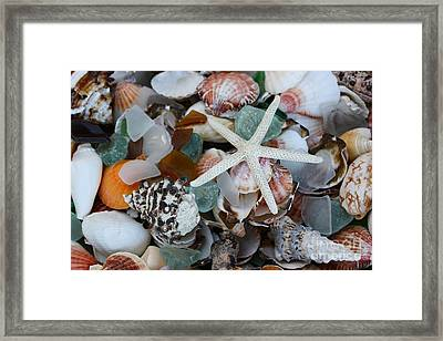 Caribbean Shells Framed Print by The Art of Alice Terrill