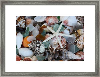 Caribbean Shells Framed Print