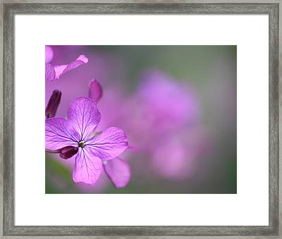 Framed Print featuring the photograph Caring by The Art Of Marilyn Ridoutt-Greene