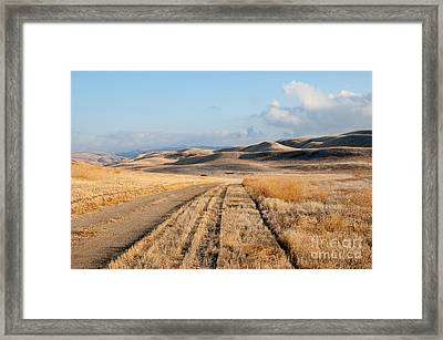 Carizzo Plains Nm 2-8559 Framed Print by Stephen Parker