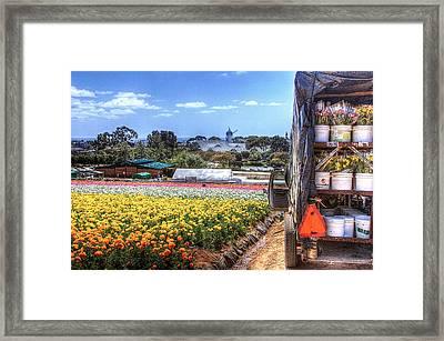 Carlsbad Flower Fields Framed Print