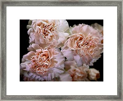 Carmel Carnations Framed Print by Mavis Reid Nugent