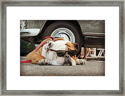 Carmel Cool Dog Framed Print