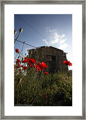 Carmel Fire 2 Framed Print by Isaac Silman