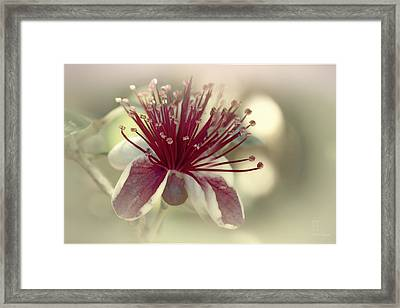 Framed Print featuring the photograph Carmella by Elaine Teague