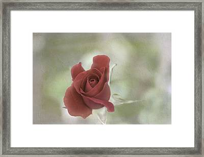 Framed Print featuring the photograph Carmen by Elaine Teague