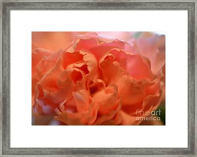 Framed Print featuring the photograph Carnation Burst by Denise Tomasura