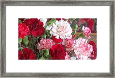 Carnation Cluster Framed Print by Christina Verdgeline