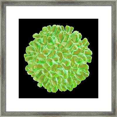 Carnation Mottle Virus Framed Print by Mehau Kulyk