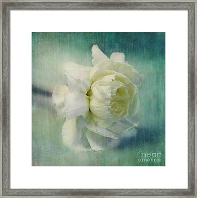 Carnation Framed Print