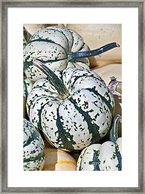 Carnival Squash Striped Green And White Framed Print