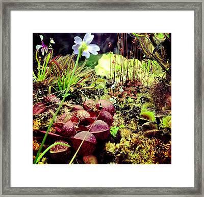 Carniverous Plants Framed Print