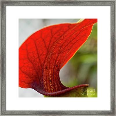 Carnivorous Plants 2 Framed Print