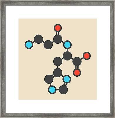 Carnosine Molecule Framed Print