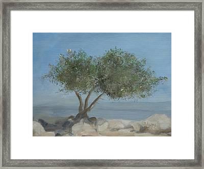 Carob Tree On Mt. Arbel  Framed Print by Rita Adams