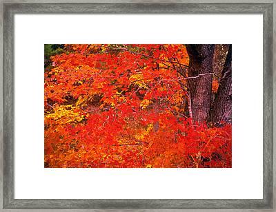 Carolina Autumn Framed Print by Marion Johnson