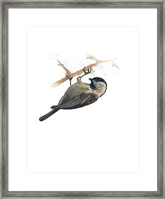 Carolina Chickadee Framed Print by Rachel Root