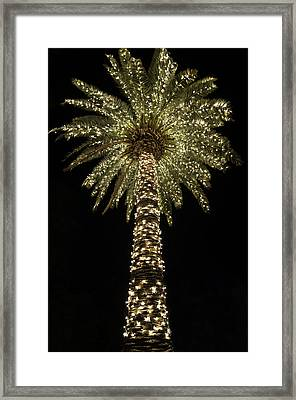 Carolina Christmas Framed Print by Serge Skiba