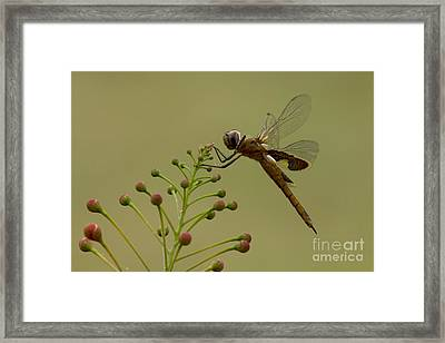 Carolina Saddlebags Framed Print
