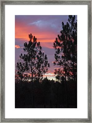 Carolina Sunset Framed Print by Carolyn Stagger Cokley