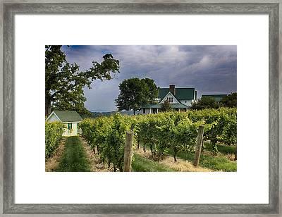 Carolina Vineyard Framed Print